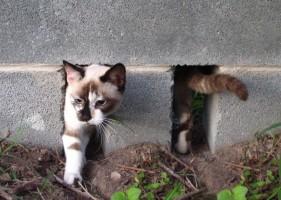 Фото кошки на даче